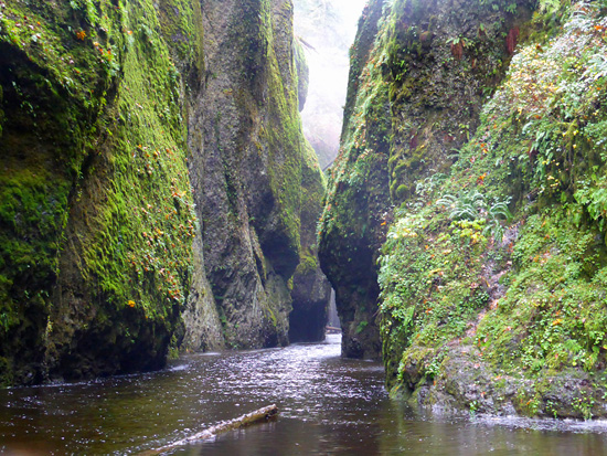 The water-filled slots of Oneonta Gorge